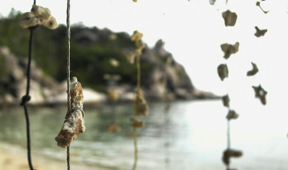 Freedom Beach, Ko Tao, Thailand - Photo by Mr & Mrs Backpacker