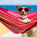 10 Money Saving Tips for the Summer